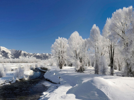 trees-hoarfrost-winter-river-source-current-day